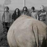 Das Nashorn fordert Musik